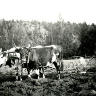 Linnea överst Rut Alm o Alice Ullberg Astrid Ullberg Siv Gustavsson Aspelund Jaen Friman028