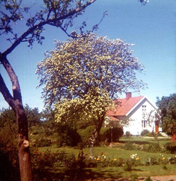 Foton Gunborg Ferm, ur hennes samlingar, 2014
