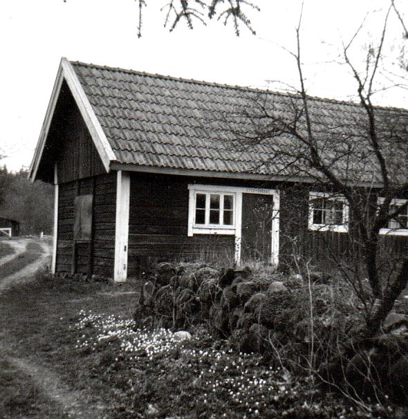 Stenstorps ladugård 1956 - foto från Vernas samlingar
