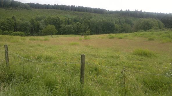 Some field of Sten