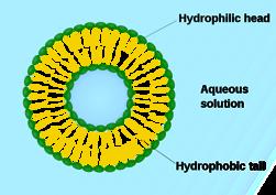 En liten liposom består av många molekyler