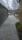 Orlando grå