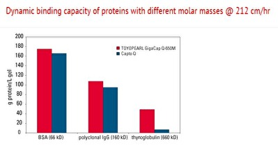 Dynamic binding capacity of proteins with different molar masses