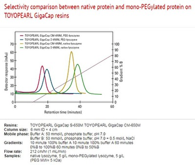 Selectivity comparison between native protein and mono-PEGylated protein on Toyopearl GigaCap resins