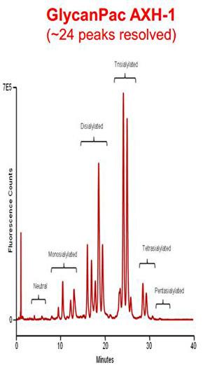 Thermo Scientific GlycanPac AXH-1