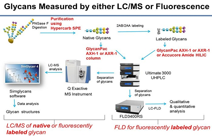 Thermo Scientific - Glcyans Measured by either LC/MS or Fluorescence