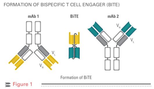 Bioseparation och UHPLC: Bispecifika Antikroppar