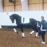 Tömkörnings Clinic 9 juni - Tömkörningsutbildning egen häst 10 juni