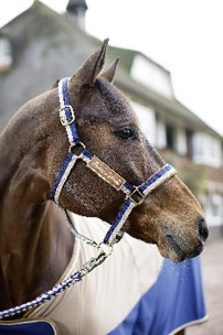 Grimma Roma - Begie och blå stl ponny