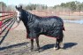 Halsdel med kardborre - M hals ( passar ponny)