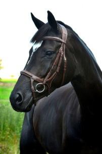 Träns Lippo Supreme Fazzino - Oakbark stl ponny