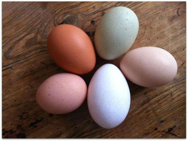 Ekologiska ägg säljs periodvis