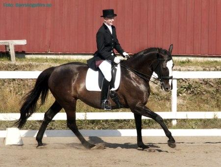 Kristina Alderheim och Lois som rider i en handsydd Unicorns sadel.
