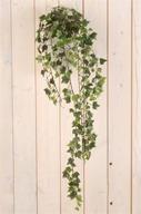 Konstväxt Hängande Murgröna