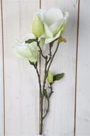 Magnolia på kvist H 76cm