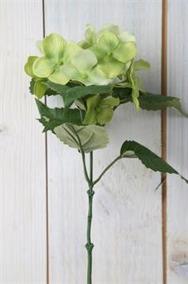 Hortensia kvist L 30 cm - Hortensia Grön