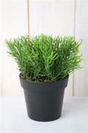 Konstväxt Örtgräs
