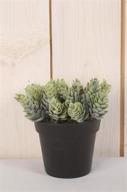 Konstväxt Ananasblad i kruka