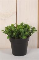 Konstväxt Kaktusblad i kruka