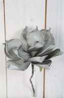 Grå Magnolia på kvist 25cm