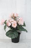Ljusrosa Begonia i kruka