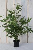 Bambu i kruka H65cm