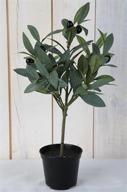 Olivträd i kruka H38cm