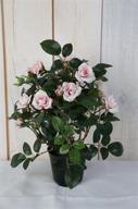 Rosa Miniros i kruka 30cm