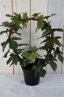 Garden Ivy H35cm