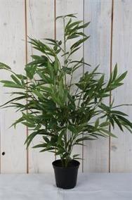 Bambu i kruka H65cm - Stor bambu H65cm