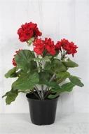 Röd Pelargon 30cm