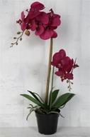 Mörklila Orkidé H60cm