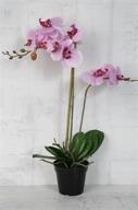 Lila Orkidé H60cm