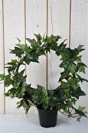 Murgröna i båge H 35cm