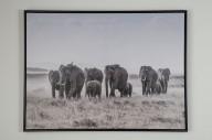 Tavla med elefanter 80x60cm