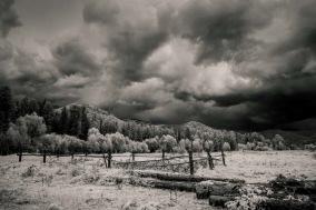 Poster Skogen i svart vitt 40x50cm