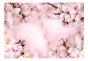 Fototapet - Spring Cherry Blossom - B400xH280cm