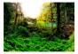 Fototapet - In tropics - B400xH280cm