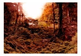 Fototapet - Trees in autumn - B150xH105cm