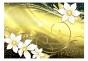 Fototapet - Magic glance III - 400x280cm