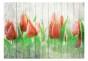 Fototapet - Red tulips on wood - 400x280cm