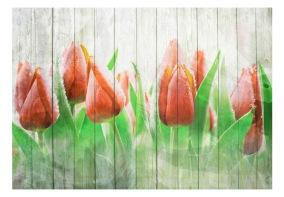 Fototapet - Red tulips on wood - 150x105cm