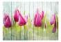 Fototapet - Tulips on white wood - B400xH280cm