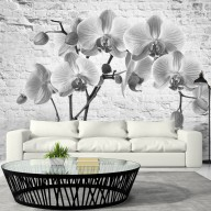 Fototapet - Orchid in Shades of Gray
