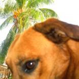 Habana Dog
