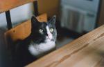 Katt vid bord 21,5 x 13,5 cm