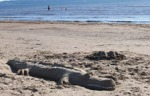 Krokodil på stranden 21,5 x 13,5 cm