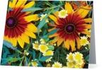 Blommor i Norre Katts Park, Halmstad – vikt kort  11x7 cm