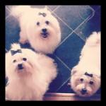 Änglarna - Marcia, Zelda, Leah