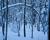 Silent snow, Uppsala